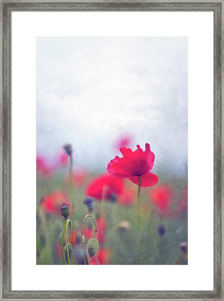 Scarlet Poppies In Painterly Style Framed Print