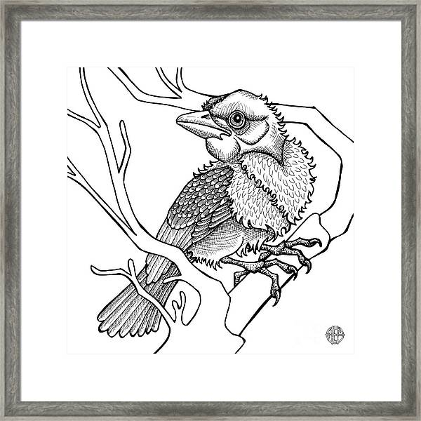 Framed Print featuring the drawing Scarlet Tanager by Amy E Fraser