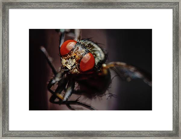 Scavenger Close-up Framed Print