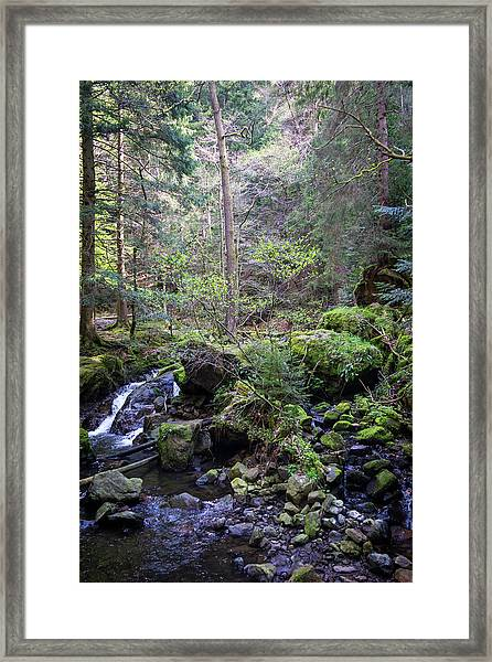 Scenic Black Forest Framed Print