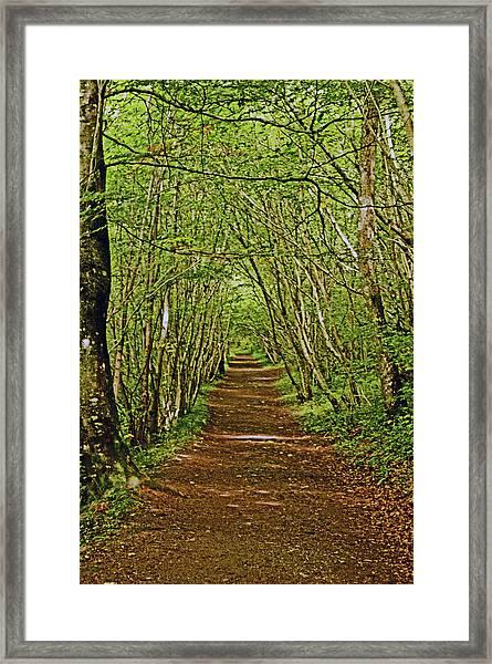 Scotland. Killiecrankie. Path Through The Trees. Framed Print