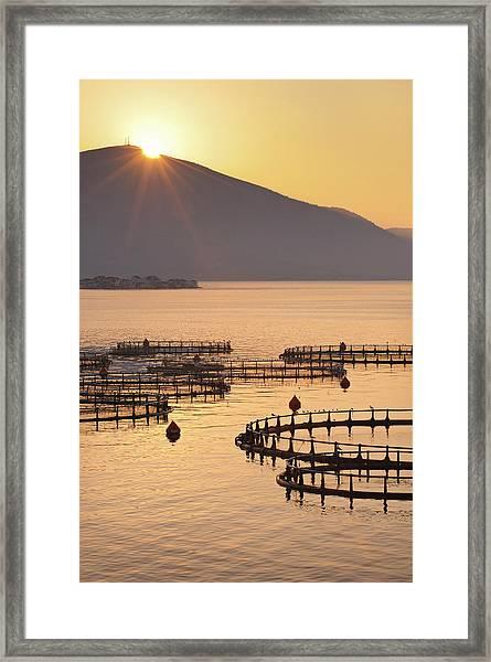 Sea Fish Farm At Sunrise In Greece Framed Print