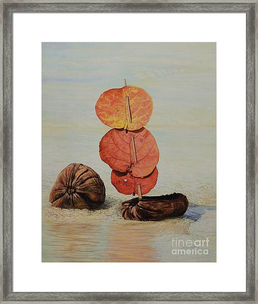 Sea Grape Sails Framed Print
