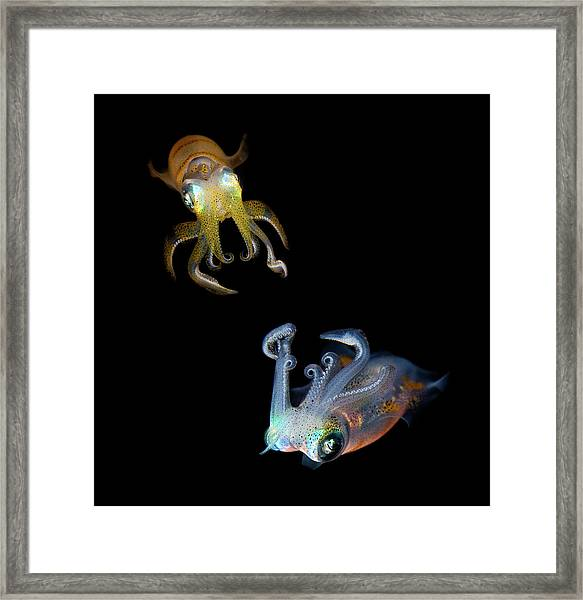 Sea Jewels Framed Print