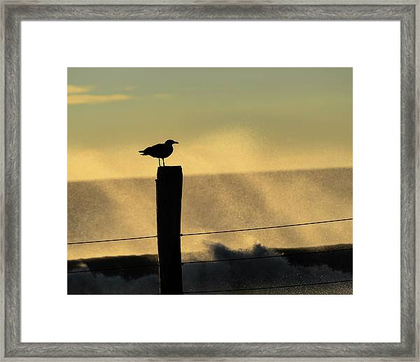 Framed Print featuring the photograph Seagull Silhouette On A Piling by William Dickman