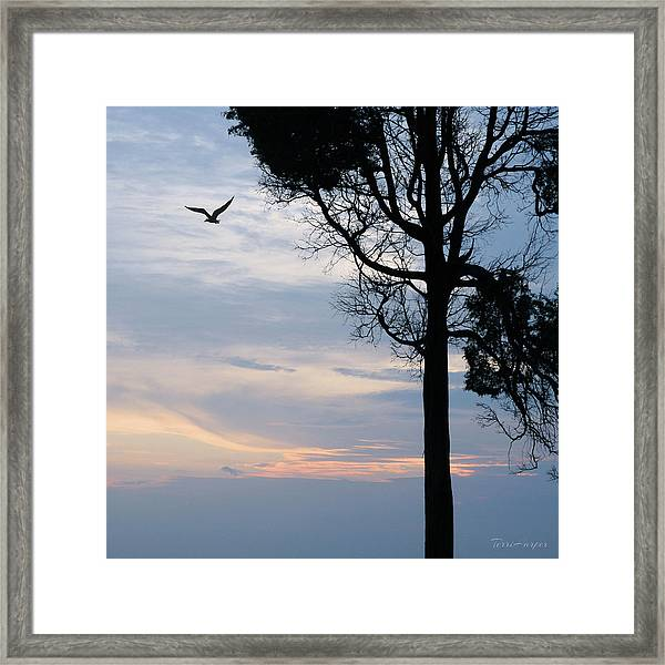 Seagull Sunset At Catawba Framed Print