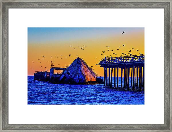 Seagulls And Sunken Ship Framed Print