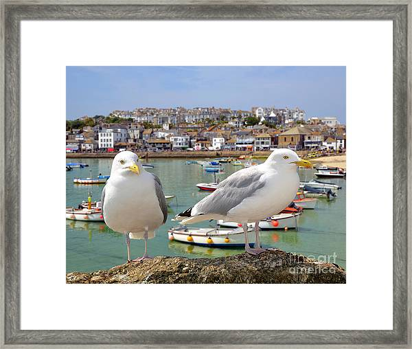 Seagulls In St Ives Harbour Cornwall Framed Print