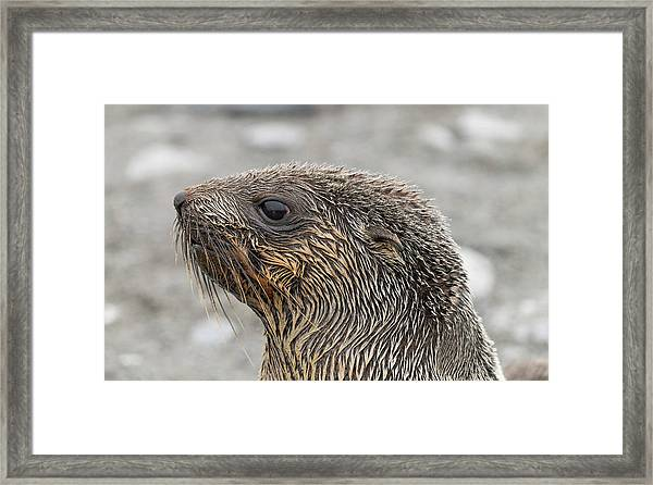 Seal Of Approval Framed Print