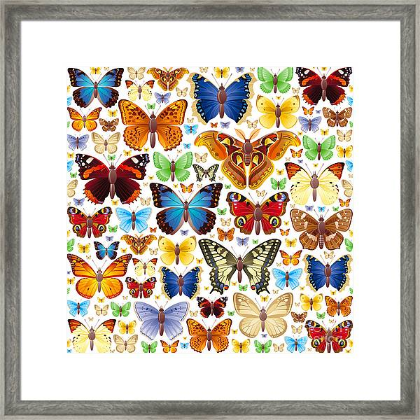 Seamless Vector Illustration Of Insects Framed Print