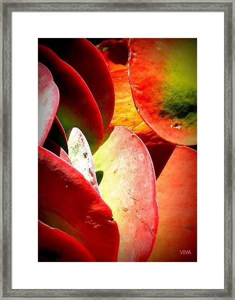 Secret  Life  Of  Plants Framed Print