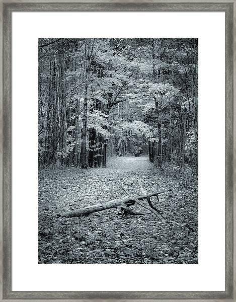 Selenium Trail  Framed Print