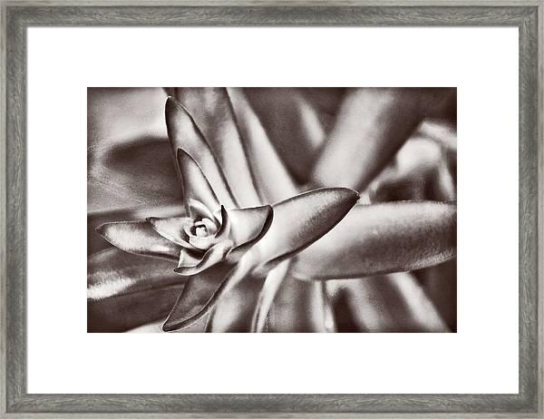 Sensual Succulent II Framed Print
