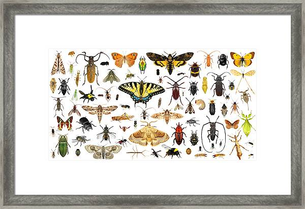 Set Of Insects On A White Background Framed Print