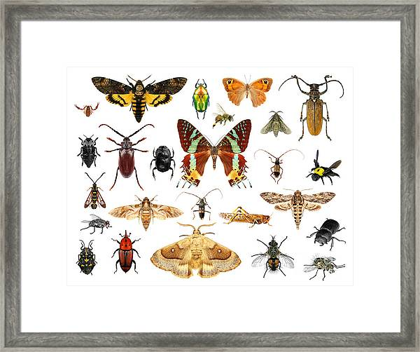 Set Of Insects On White Background Framed Print