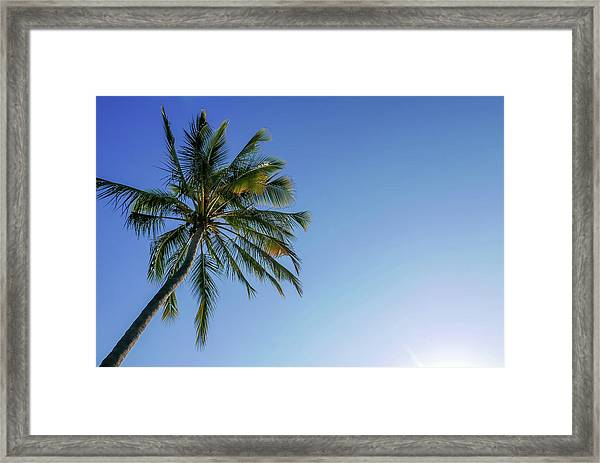 Shades Of Blue And A Palm Tree Framed Print