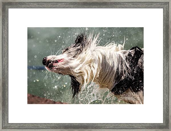 Shaking Dog Framed Print