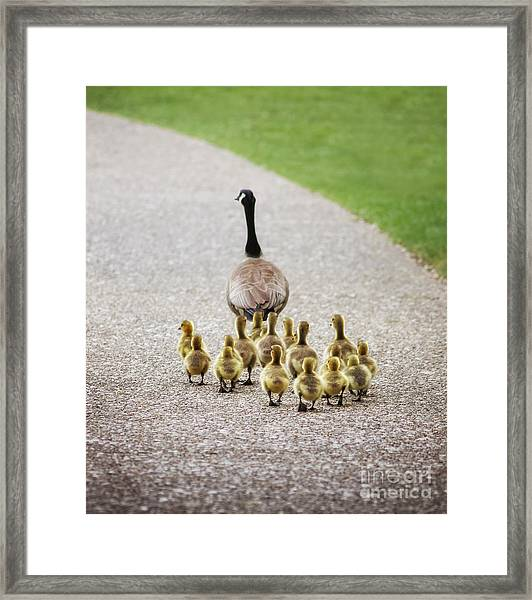 Shallow Dof On Babies A Cute Family Of Framed Print