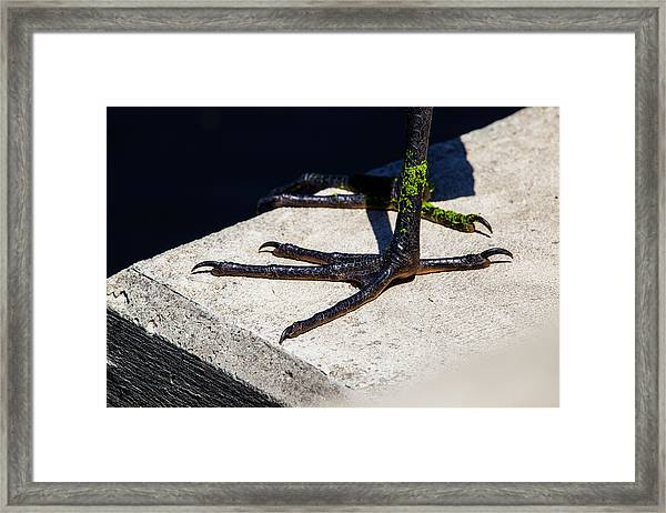 Sharp Perspective  Framed Print
