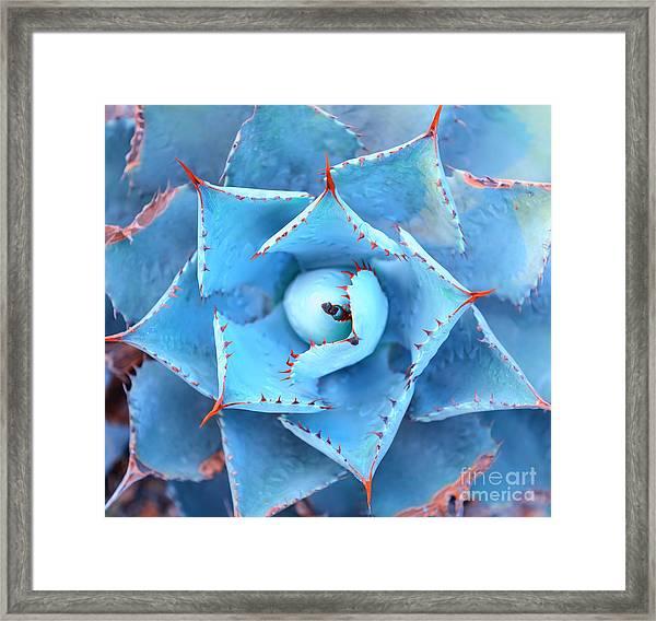 Sharp Pointed Agave Plant Leaves Framed Print