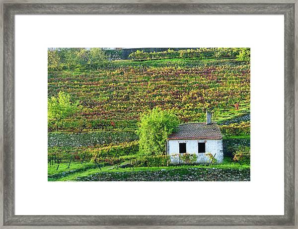 Shed In Autumn Vineyard Framed Print