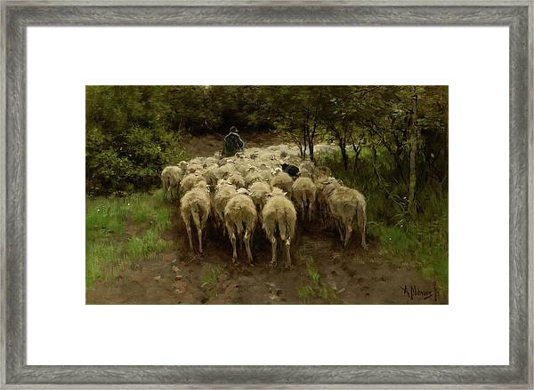 Sheep In The Forest, 1880 Framed Print