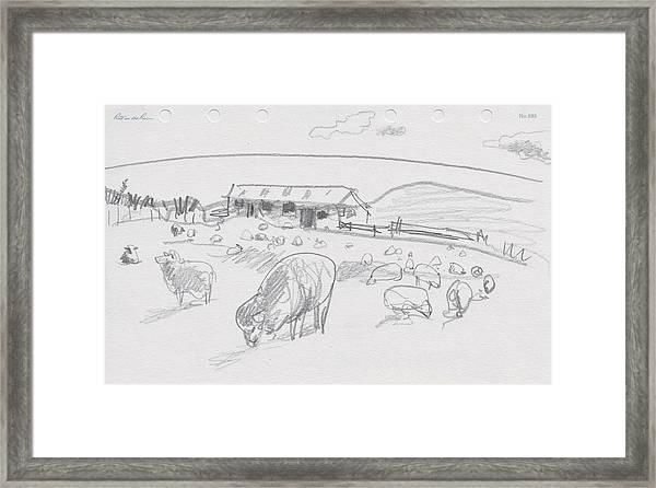 Sheep On Chatham Island, New Zealand Framed Print