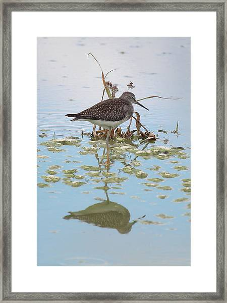 Shorebird Reflection Framed Print