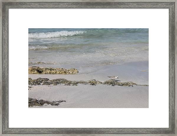 Shorebird Framed Print