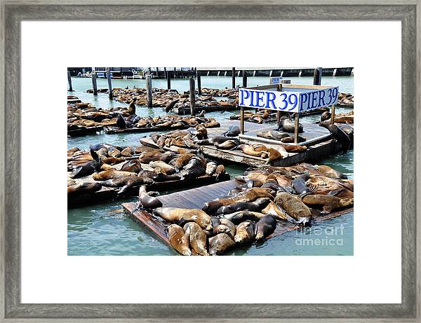 Shoreline Along San Francisco Looking Framed Print