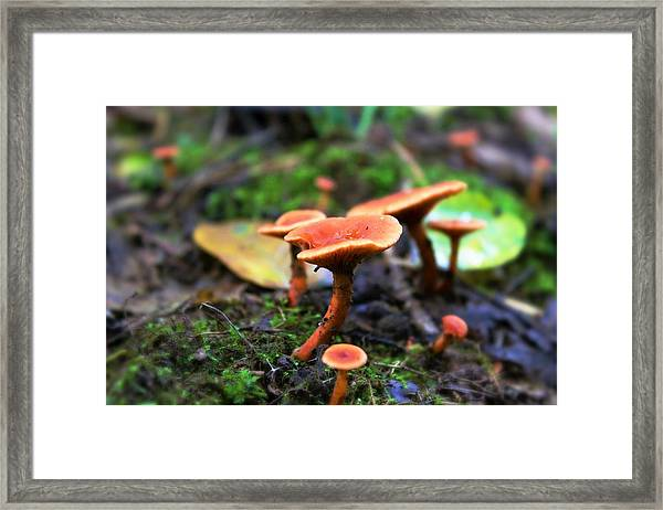 Framed Print featuring the photograph Shrooms by Candice Trimble