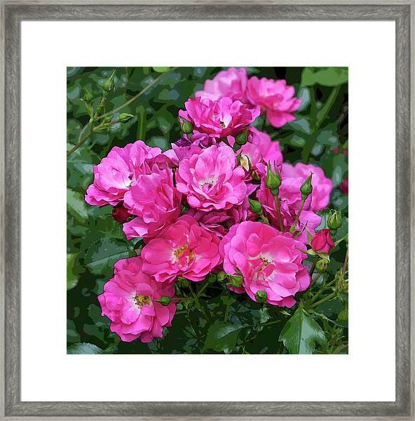 Shrub Rose Stylized Framed Print