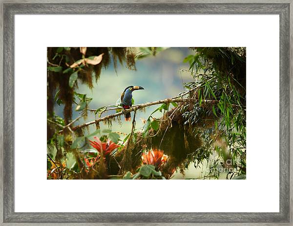 Shy High Altitude Andean Colorful Framed Print