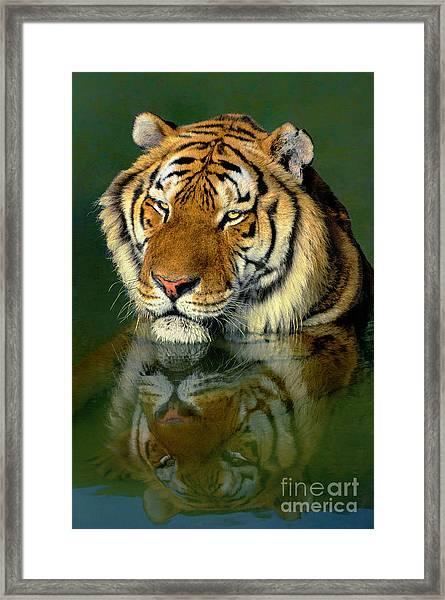 Siberian Tiger Reflection Wildlife Rescue Framed Print