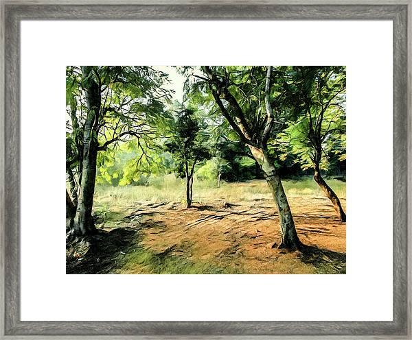 Silence Of Forest Framed Print