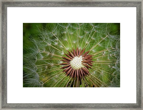 Silent Wishes Framed Print