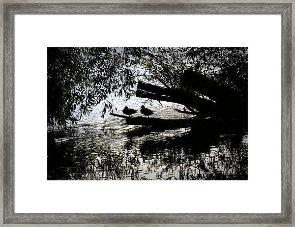 Silhouette Ducks #h9 Framed Print