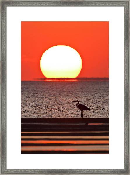 Silhouette Of Great Blue Heron Ardea Framed Print by Danita Delimont