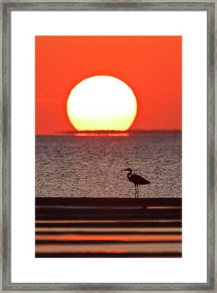 Silhouette Of Great Blue Heron Ardea Framed Print