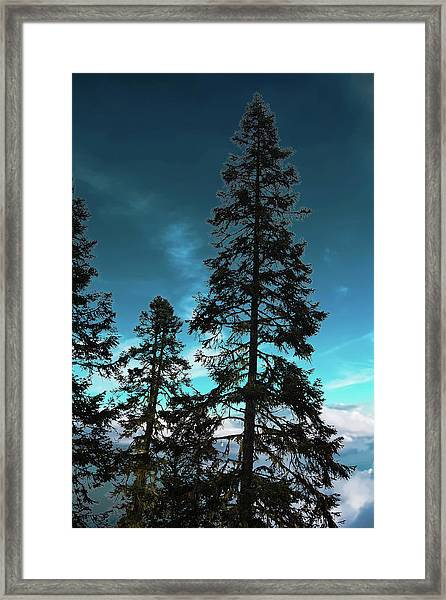Silhouette Of Tall Conifers In Autumn Framed Print