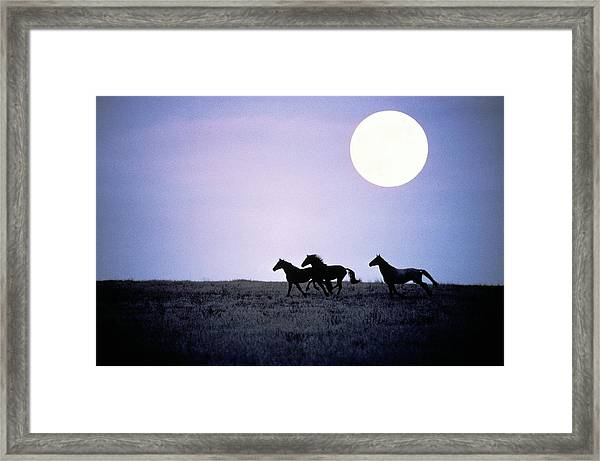 Silhouette Of Wild Horses Running In Framed Print by Jake Rajs