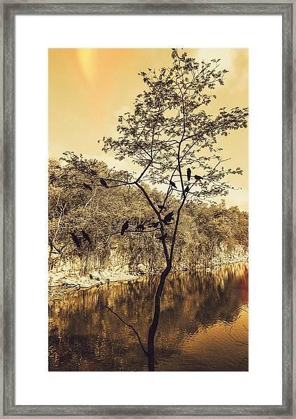 Silhoutte Framed Print