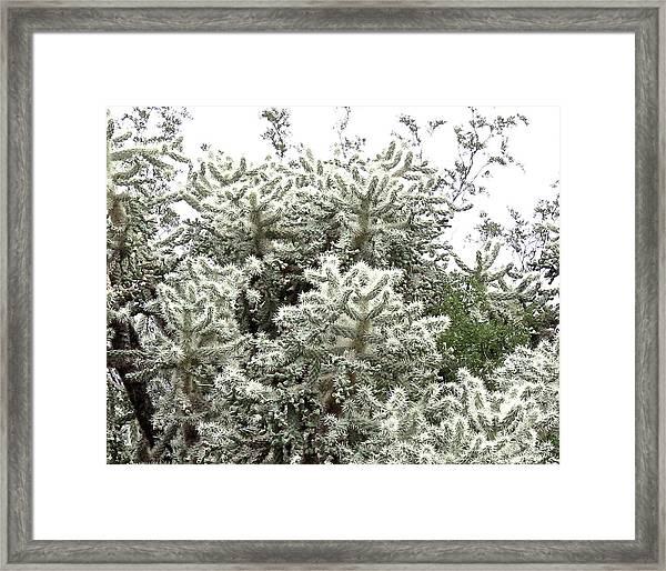 Silvery Teddy Bear Cholla Framed Print