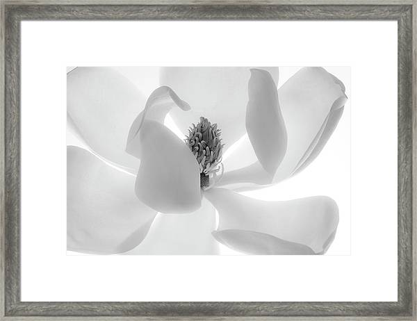 Simple Elegence Framed Print