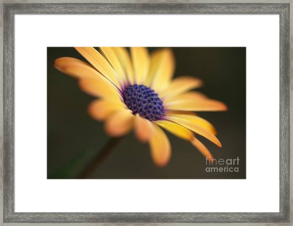 Simply Beautiful In Yellow To Orange  Framed Print