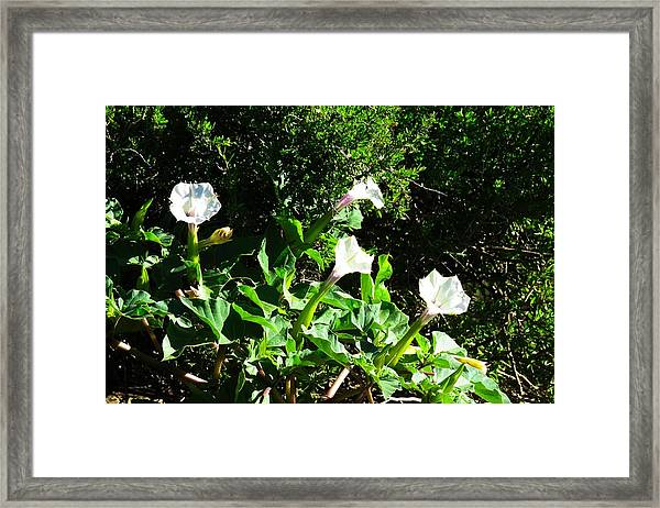 Sisters In The Sun Framed Print