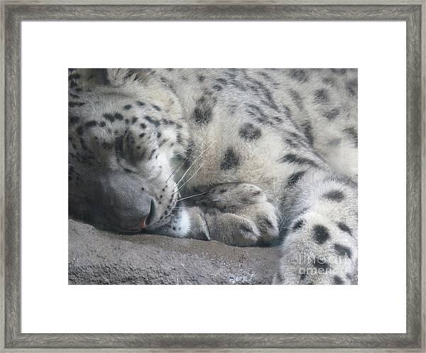 Sleeping Cheetah Framed Print