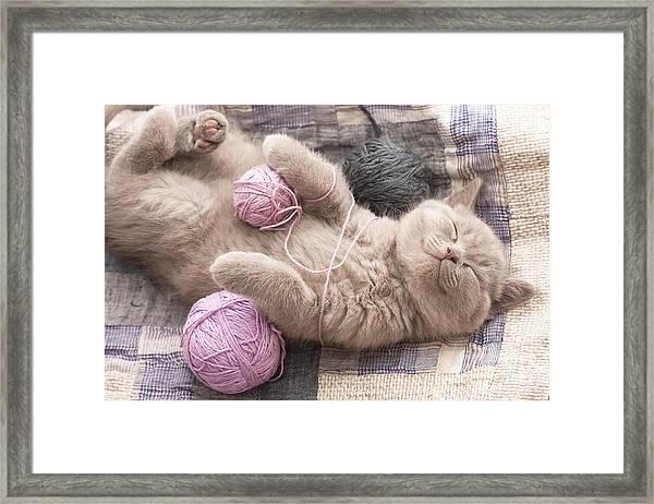 Sleeping Kitten Rare Color Lilac Framed Print