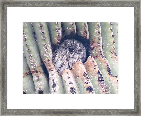 Sleepy Eye Framed Print
