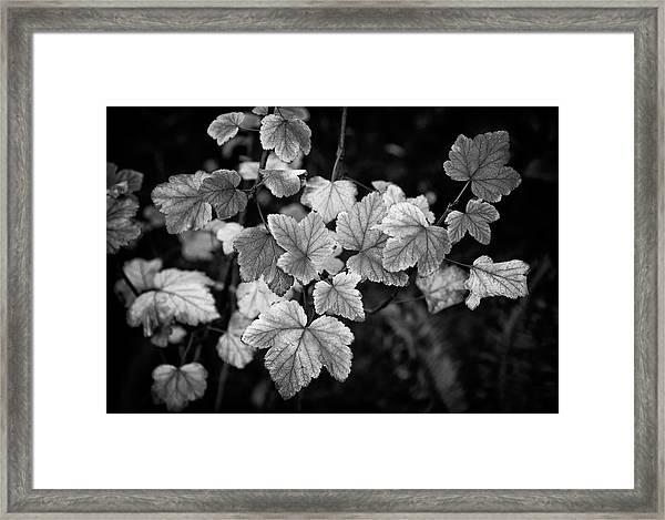 Slipping Into Fall Framed Print